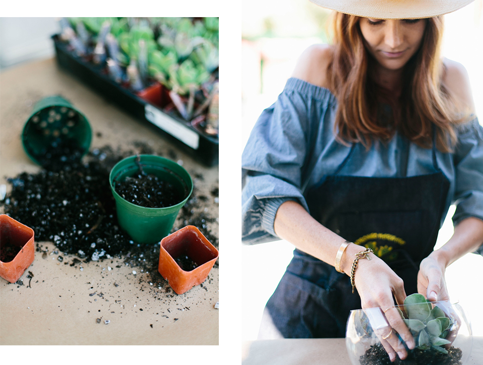modernism-week-could-i-have-that-diy-succulents